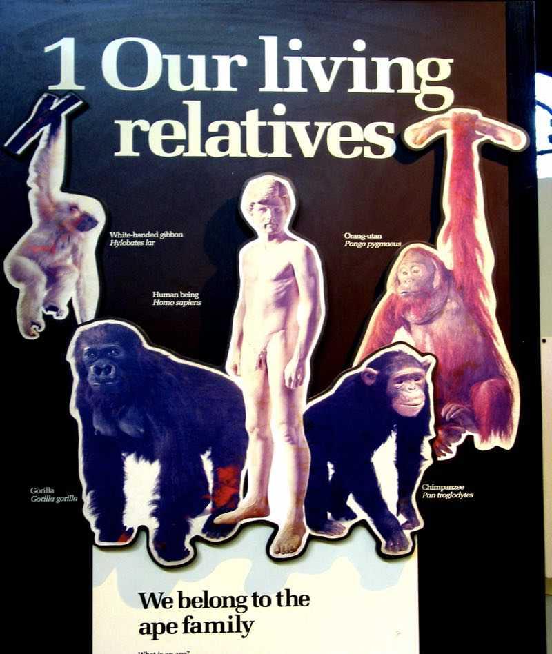 false theories of mans origin 1
